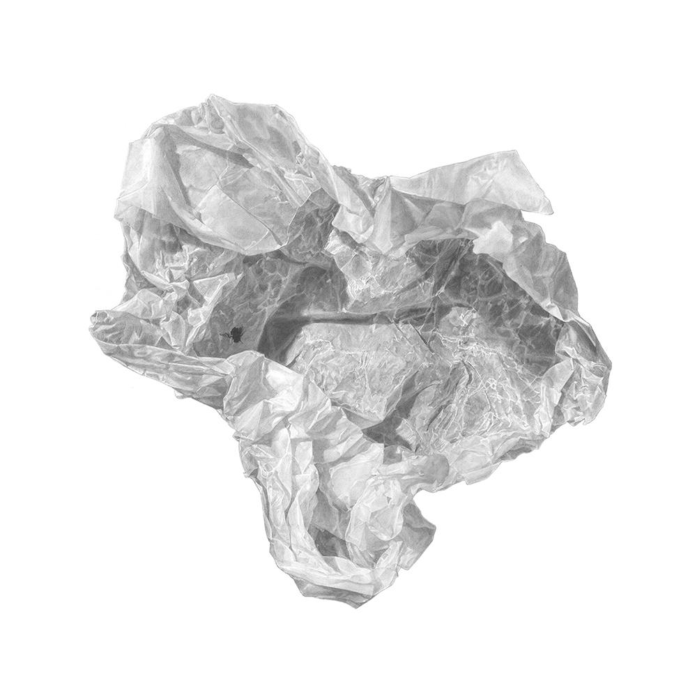 זבוב מת על נייר שעווה – A dead fly on wax paper