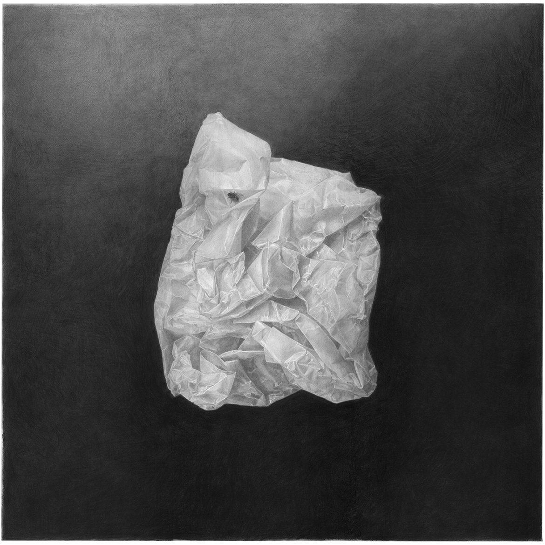 זבוב חי על נייר שעווה – A living fly on wax paper